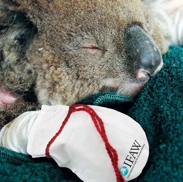 Варежки для австралийских коал, пострадавших от пожаров.