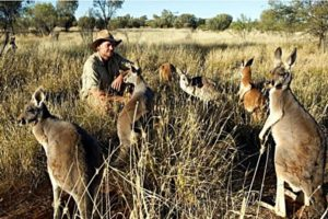 Охота на кенгуру в Австралии.