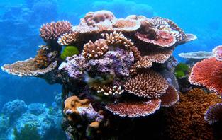 http://www.avstralianature.ru/img/pages/Спасение Большого барьерного рифа