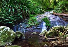 http://www.avstralianature.ru/img/pages/Национальный парк «Ламингтон»