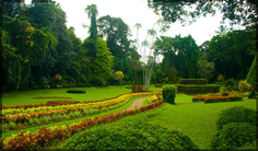 http://www.avstralianature.ru/img/pages/Ботанический сад в Мельбурне