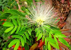 http://www.avstralianature.ru/img/pages/Флора Австралии – главные особенности и уникальность природной среды