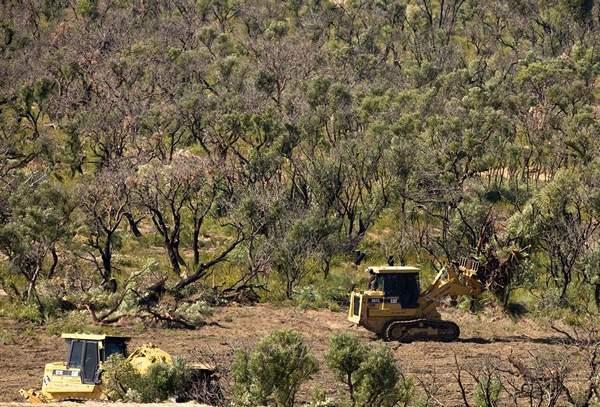 http://www.avstralianature.ru/img/pages/Вырубка австралийских лесов.