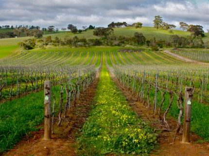 http://www.avstralianature.ru/img/pages/Долина Баросса (Barossa Valley)