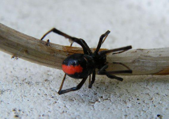 http://www.avstralianature.ru/img/pages/Обманчиво не слишком опасная австралийская фауна.