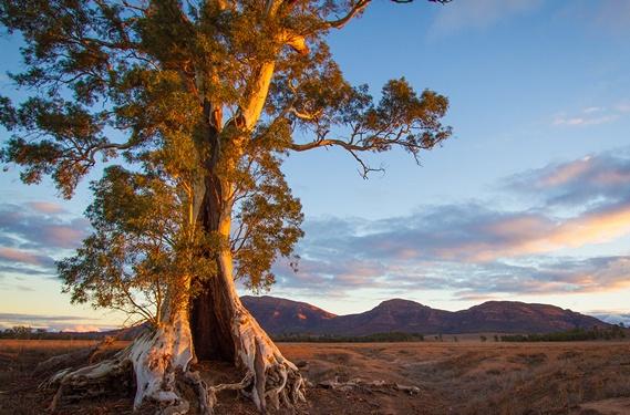 http://www.avstralianature.ru/img/pages/Австралийские красоты и их своеобразие.